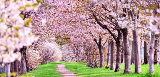 第7回春咲会の予約状況[更新2017.4.25]