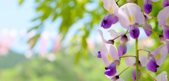 第7回春咲会の予約状況[更新2017.5.11]