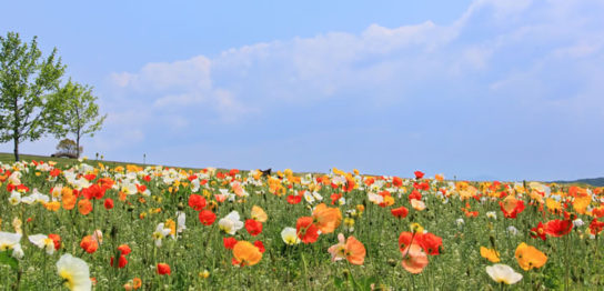 春咲会のサイトをリニューアルしました